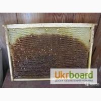 Продам пчелиную сушь