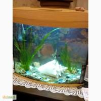 Продается аквариум без рыбок