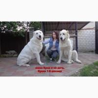 Крупные щенки