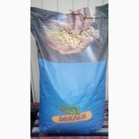 Кукурудза посівна та Соняшник