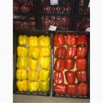 Перец красный, жёлтый и зелёный