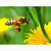 Пчелопакеты 20шт., бджолопакеты, пчелы, матки
