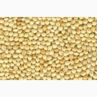 Семена просо жёлтого, (белого) Сорт-Омрияне