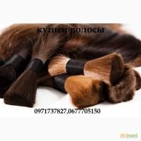 Покупка волос Харьков, скупка волос харьков, куплю волосы харьков