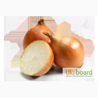 Озимый лук севок/ чеснок BROER BV /Top Onions (Нидерланды). Опт, мелкий опт