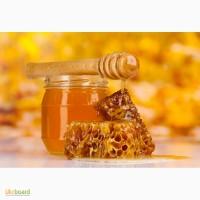 Компания БИО ЛЕНД закупает органический мёд оптом
