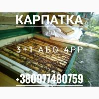 Бджолопакети Карпатка Синевир на 4рр Пчелопакеты 3+1. 2019р