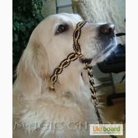 Недоузок-халти для собак
