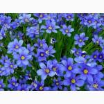 Многолетние садовые цветы. Много видов