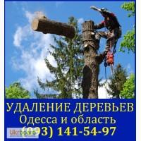 Спилить дерево Одесса