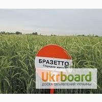Семена Рожь озимая KWS, насіння жито озиме, Бразетто, Пикассо, Гуттино