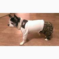 Одежда для собак. Легкие комбинезончики