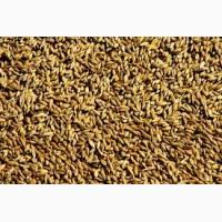 Продам пшеницу фуражную 50 000 МТ FOB, CPT