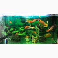 Продаю аквариум с рыбками и с оборудованием