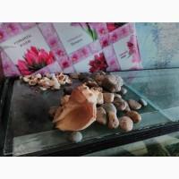 Камешки и ракушки в аквариум