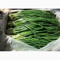 Продам лук зеленый оптом и розницу