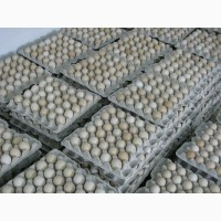Столове (товарне) яйце 0, 60 грн