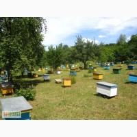 Пчелосемьи купить Украина Харьков