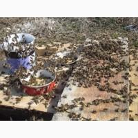 Соевая мука для пчел (белковая подкормка), 1кг. Украина