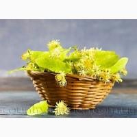 Продам саженцы Липы и много других растений (опт от 1000 грн)