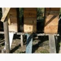 Продам: пасіка, відводки, пчоло-пакети, мед, віск, прополіс