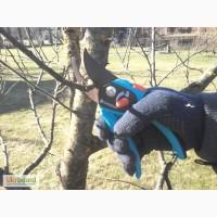 Обрезка деревьев в Киеве и области