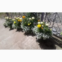 Цветы, черенки цветов, сопутствующие товары