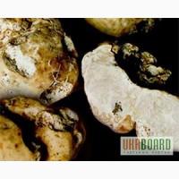 Мицелий трюфеля, свежая живая грибница грибов шампиньон, вешенка, шиитаке, опенок