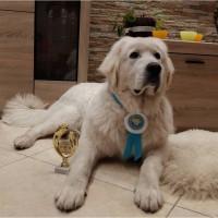 Щенки Польская Подгалянская овчарка от Чемпионов Украины