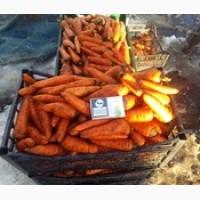 Продам морковь сорт Шантане