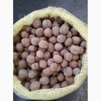Продам на экспорт грецкий орех калибр 28 плюс. Отличное качество