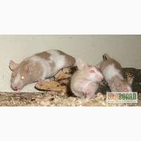 Продаются декоративные сатиновые мышки