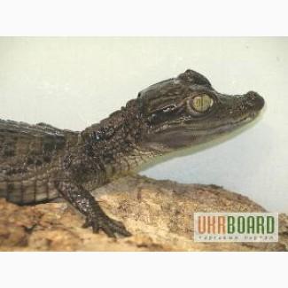 Ручные рептилии с террариумами