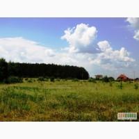 11 га под строительство, Березовка, Киев 17 км, возле леса, трасса Е-40 (на Европу)