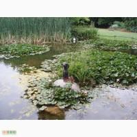Биопрепарат Понд-плюс для удаления осадка в прудах и водоёмах