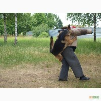 Дрессировка собак в Харькрве