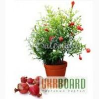 Экзотические комнатные растения и комнатные плодов
