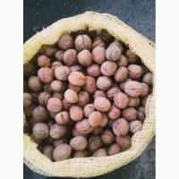 Продам на экспорт грецкий орех калибр 28