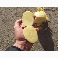 Продаю картофель. опт