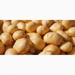 Продам картофель оптом импортный, экстра качество