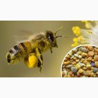 Куплю дорого пыльцу, пергу по всей Украине