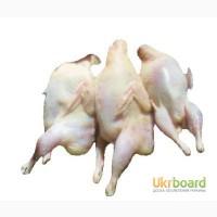 Тушки(мясо) перепелов