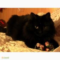 Эличка княжна из кошачьего царства