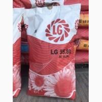 Продажа Limagrain LG 5580, семена подсолнечника