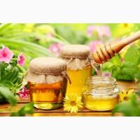 Куплю гречишный мёд