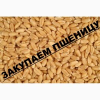 Куплю кукурузу и другие с.х. культуры