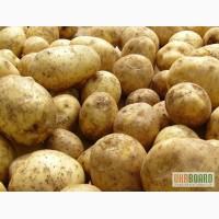 Скупаю картошку