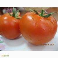 Семена томата Баракуда F1 250 сем