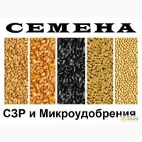 Семена от лучших производителей (подсолнечник, кукуруза, рапс)