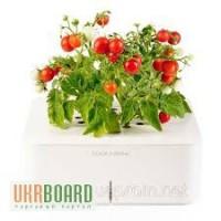Умный вазон мини томаты Click Grow smartpot (CGS5EN)